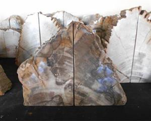 Petrified Wood Bookend
