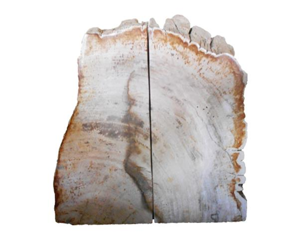 Petrified Wood Bookend#BKN202
