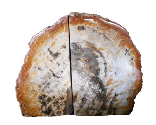 Petrified Wood Bookend#BKN219