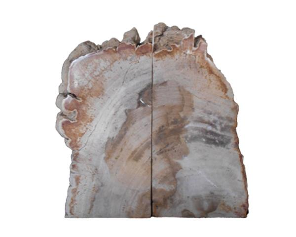 Petrified Wood Bookend#BKN225