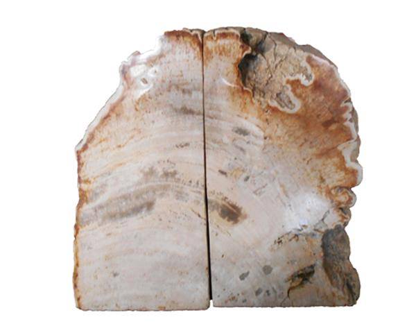 Petrified Wood Bookend#BKN234
