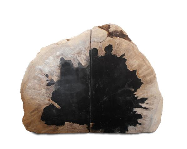 Petrified Wood Bookend#BKN252