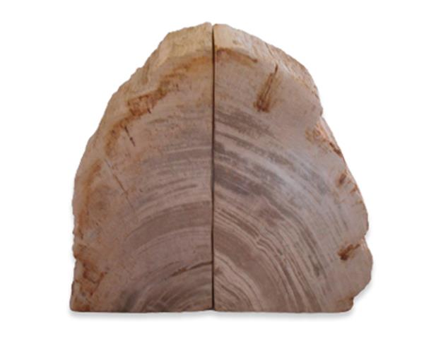 Petrified Wood Bookend#BKN438