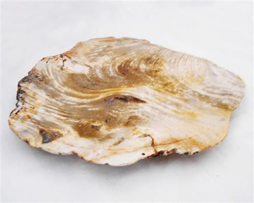Petrified Wood Large Plate#PLT15