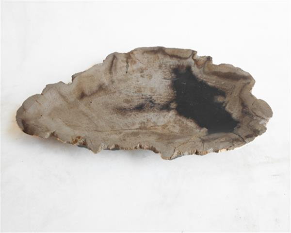Petrified Wood Plate Extra Small Size#PLT224