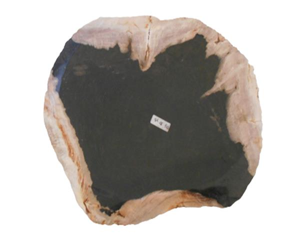 Petrified Wood Plate Extra Small Size#PLT312