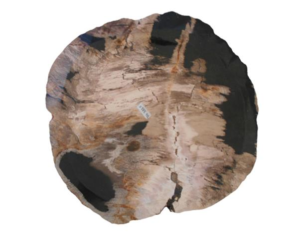 Petrified Wood Plate Small Size#PLT333