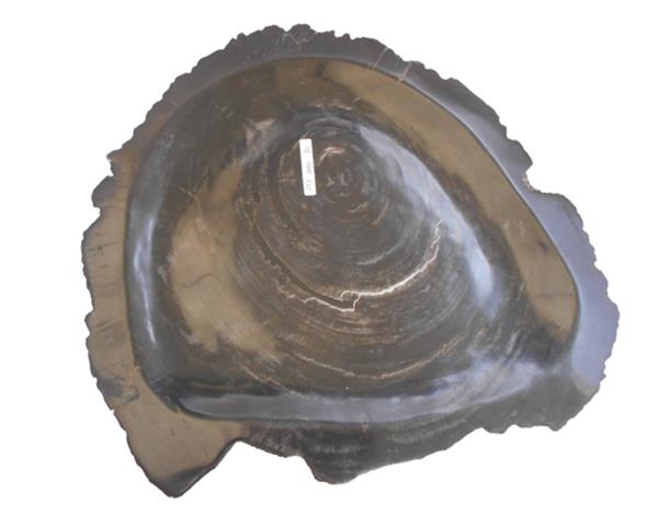 Petrified Wood Plate Medium Size#PLT349