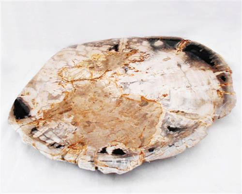 Petrified Wood Large Plate#PLT37