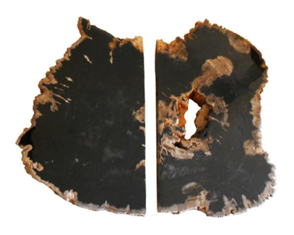 Set of Petrified Wood Slab#SLBP01