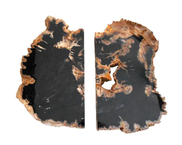 Set of Petrified Wood Slab#SLBP03