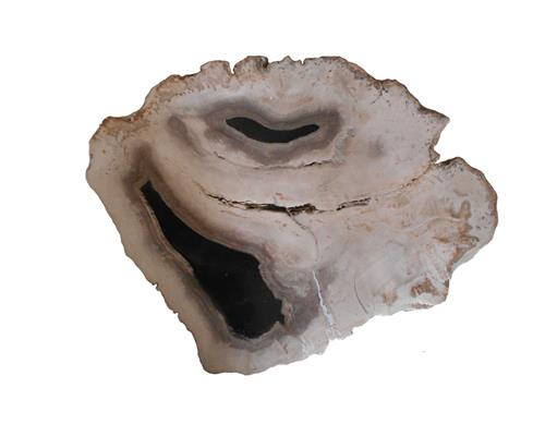 Petrified Wood Slab#SLTP361