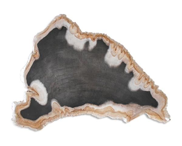 Petrified Wood Slab#SLTP494