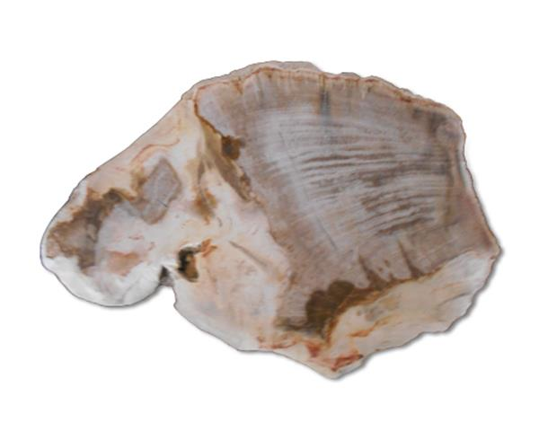 Petrified Wood Slab#SLTP541