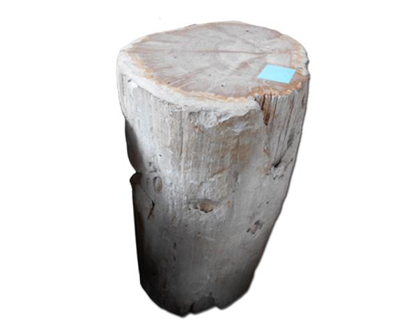 Petrified Wood Round Stool Top Polish#SRTP56