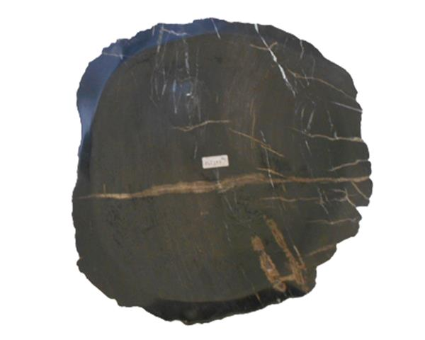 Petrified Wood Plate Extra Small Size#PLT297