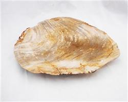 Petrified Wood Large Plate#PLT01