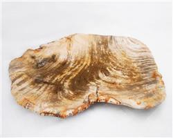 Petrified Wood Large Plate#PLT02