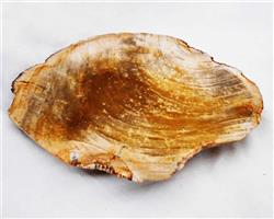 Petrified Wood Large Plate#PLT03
