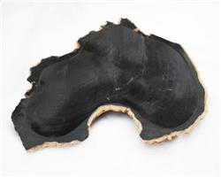 Petrified Wood Large Plate#PLT04