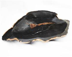 Petrified Wood Large Plate#PLT05