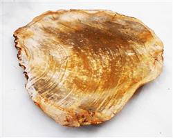 Petrified Wood Large Plate#PLT07