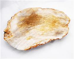 Petrified Wood Large Plate#PLT10