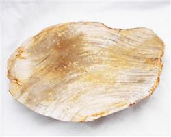 Petrified Wood Large Plate#PLT11