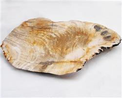 Petrified Wood Large Plate#PLT12