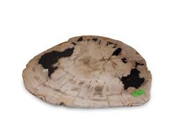 Medium Brown Petrified Wood Plate#PLT125