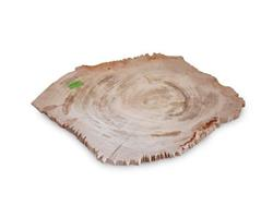 Small Petrified Wood Jagged Plate#PLT162