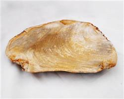 Petrified Wood Large Plate#PLT17