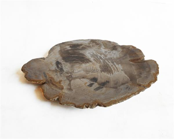 Petrified Wood Plate Extra Small Size#PLT222