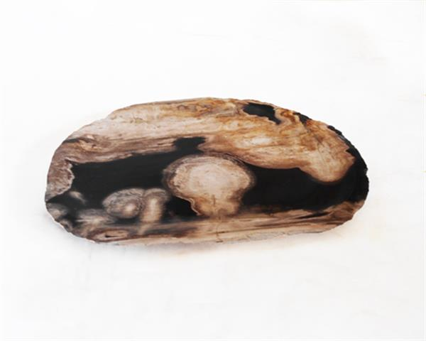 Petrified Wood Plate Small Size#PLT236