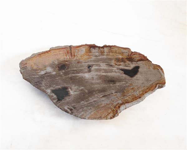 Petrified Wood Plate Small Size#PLT240