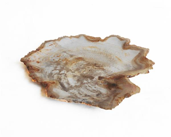 Petrified Wood Plate Small Size#PLT248
