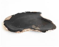 Petrified Wood Plate Small Size#PLT249