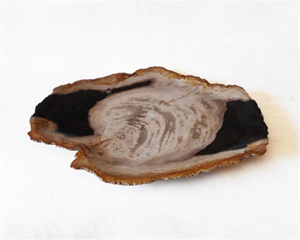 Petrified Wood Plate Medium Size#PLT257