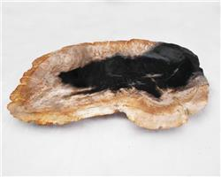 Petrified Wood Large Plate#PLT26