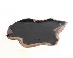 Petrified Wood Plate Medium Size#PLT279