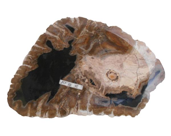 Petrified Wood Plate Extra Small Size#PLT295