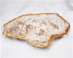 Petrified Wood Large Plate#PLT30