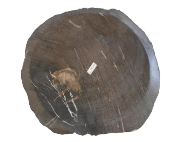 Petrified Wood Plate Extra Small Size#PLT301