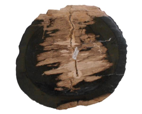 Petrified Wood Plate Extra Small Size#PLT303