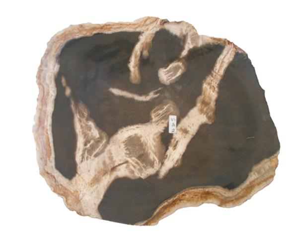 Petrified Wood Plate Small Size#PLT321