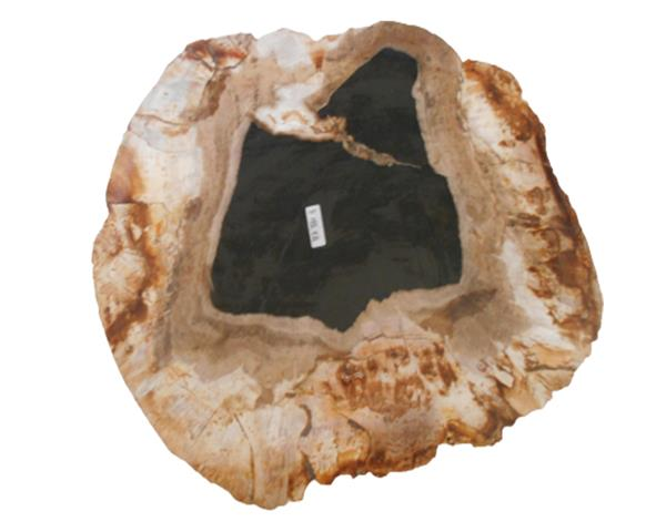 Petrified Wood Plate Small Size#PLT331