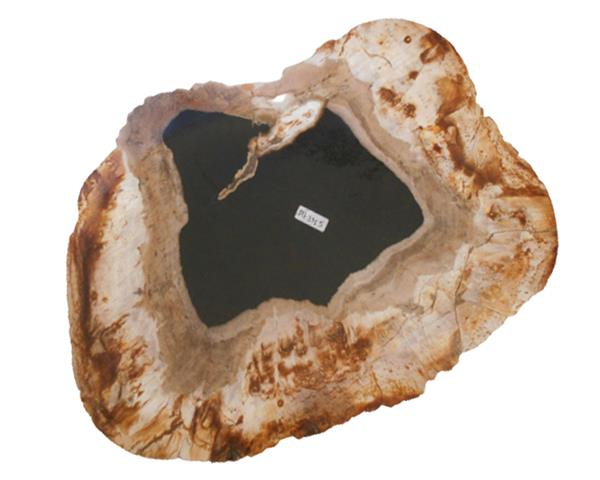 Petrified Wood Plate Small Size#PLT335