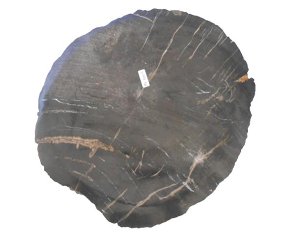 Petrified Wood Plate Small Size#PLT339