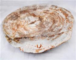 Petrified Wood Large Plate#PLT35