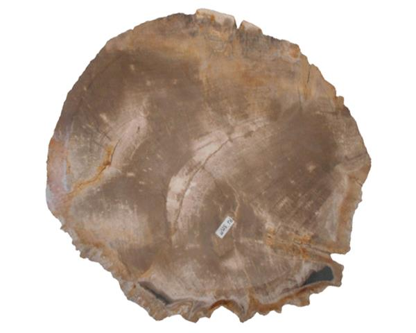 Petrified Wood Plate Medium Size#PLT355
